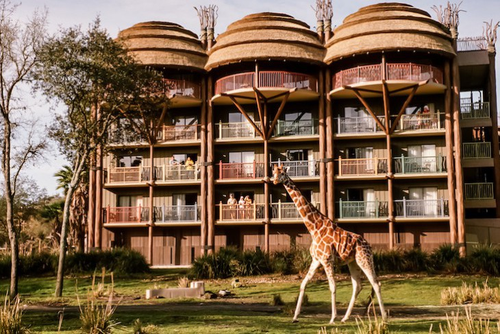 Giraffe's on the resort's Arusha Savanna