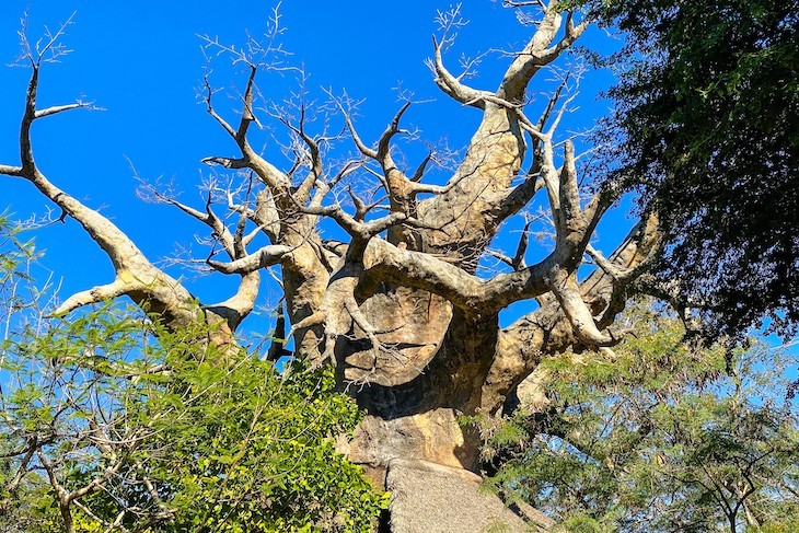 This area's baobab tree is a highlight