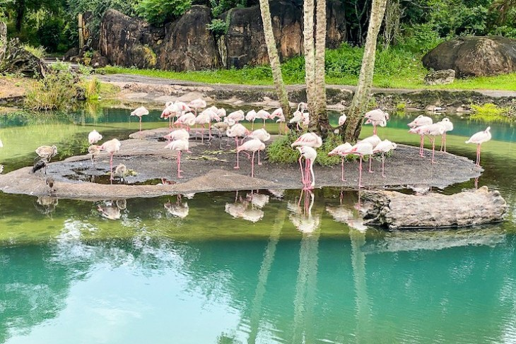 Kilimanjaro Safaris flamingos