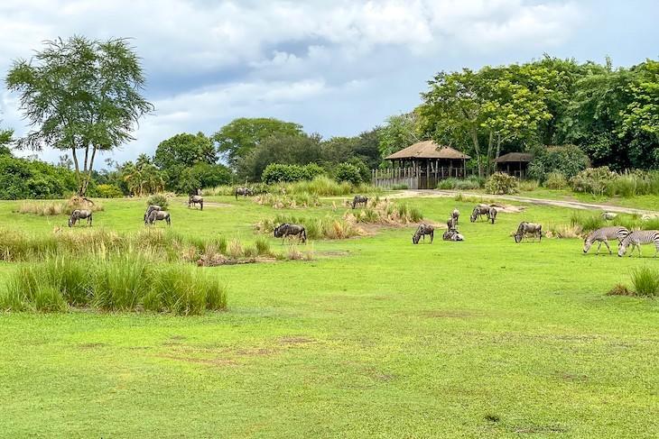Kilimanjaro Safaris savanna
