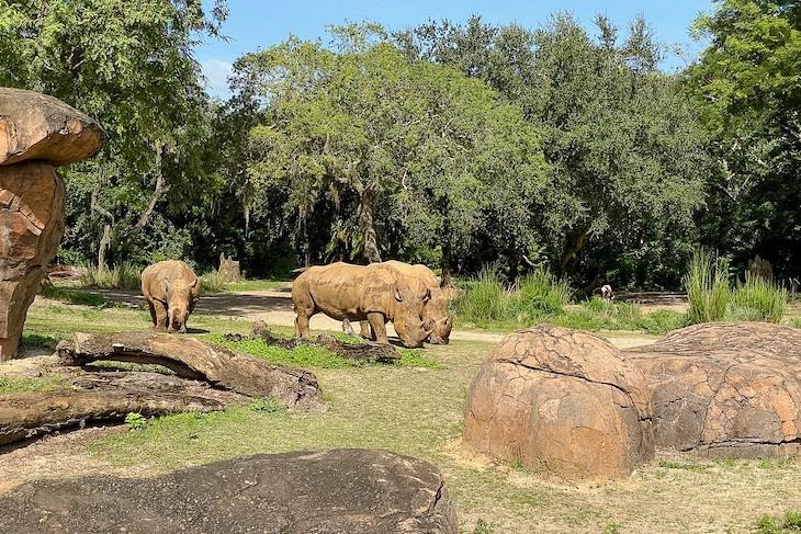 Kilimanjaro Safarisrhinos