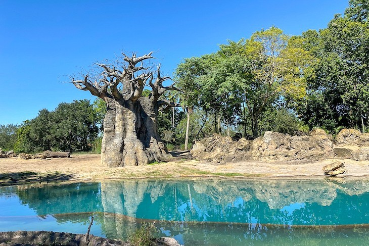 This area's baobab trees are a highlight