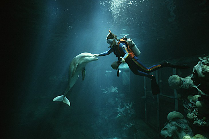 Diver at The Seas with Nemo & Friends® Attraction