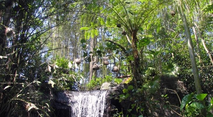 Pangani Forest Exploration Trail Walking Tour