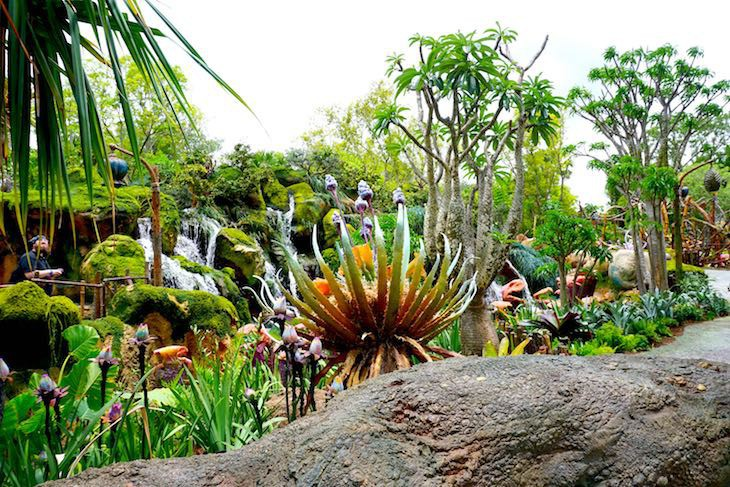 Flora and fauna in Pandora Land