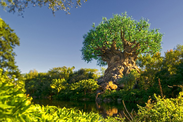 Tree of Life® Attraction