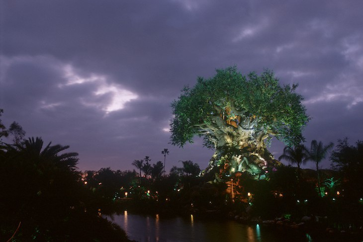 Tree of Life Nighttime Awakenings
