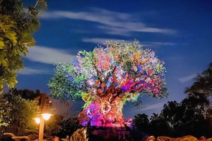Nothing more beautiful that the Tree of Life after dark